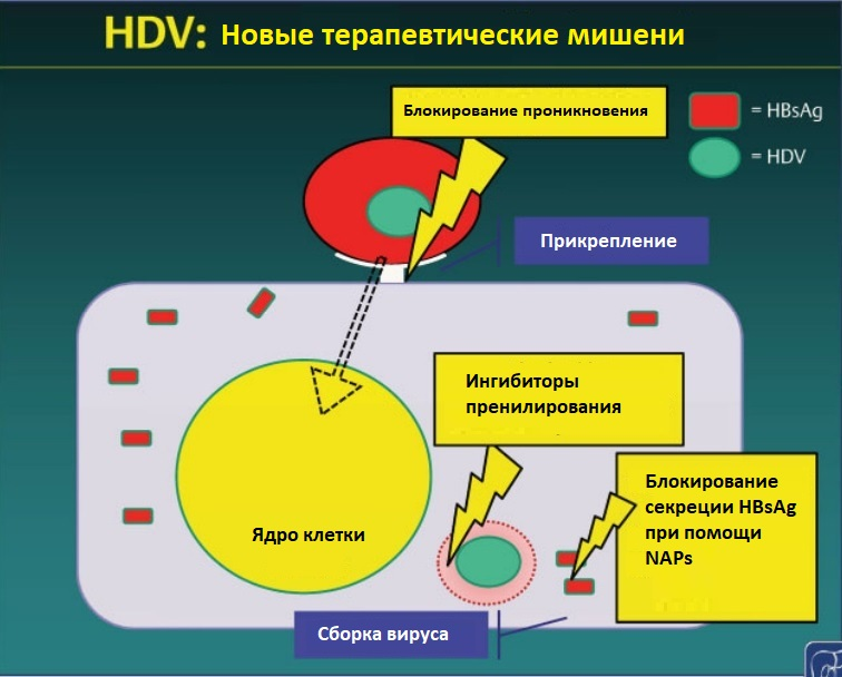 HDV мишени