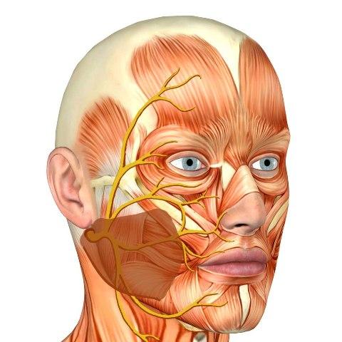 Нейропатия лицевого нерва