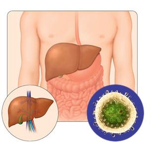 Может ли анализ крови не показать гепатит с