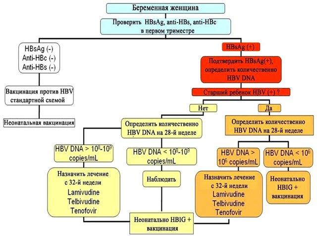 Алгоритм обследования беременных и управления HBV-инфекцией у беременных
